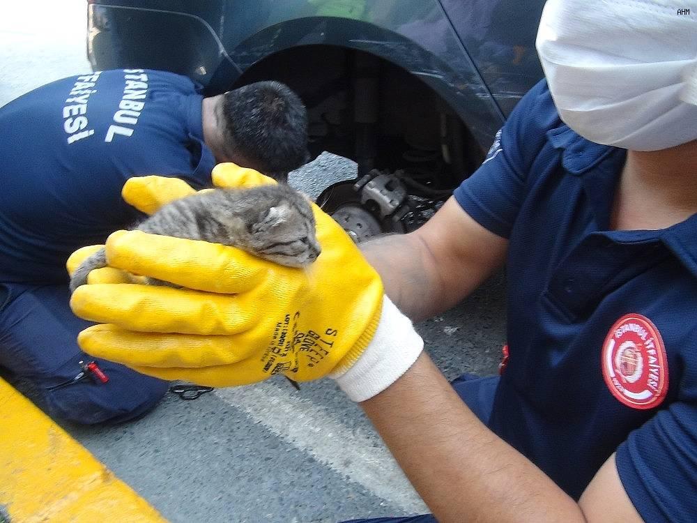 2020/07/taksimde-yavru-kedileri-kurtarma-operasyonu-20200730AW07-6.jpg