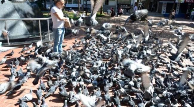 Avcılar'da Güvercinlerin Yem Kapma Çabası