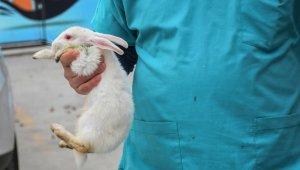 Köpeğin ısırarak yaraladığı tavşan yeniden hayata tutundu