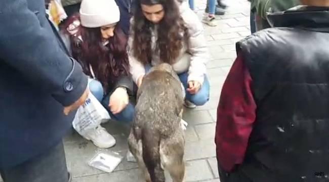 Gaziosmanpaşa'da araç çarpan köpeğe vatandaş sahip çıktı