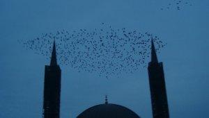 Taksim Semalarında Sığırcık Kuşlarının Muhteşem Dansı