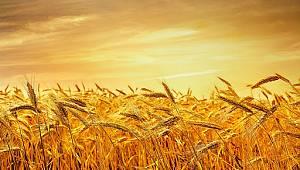 Her karış toprak tohumla buluşacak!