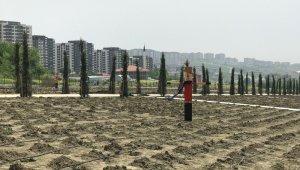 Beylikdüzü'nde 20 bin dönümlük organik tarım alanı oluşturuldu