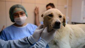 Koranavirüse karşı 35 farklı hayvan üzerinde araştırma yapıldı