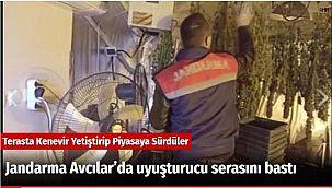 Jandarma Avcılar'da uyuşturucu serasını bastı