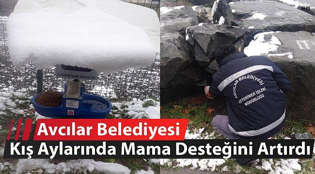 Avcılar Belediyesi kış aylarında mama desteğini artırdı