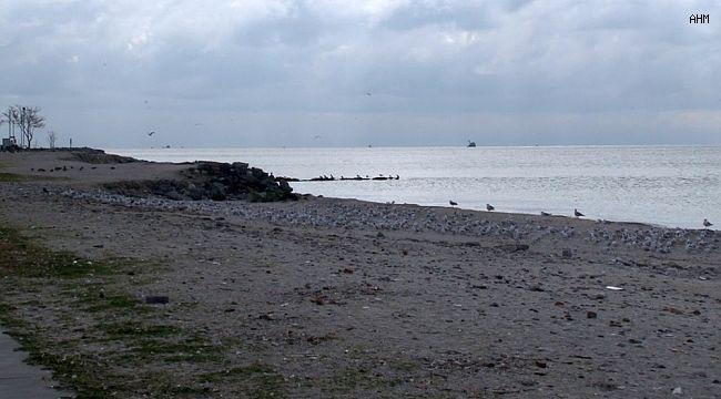 Menekşe Sahili martılara kaldı