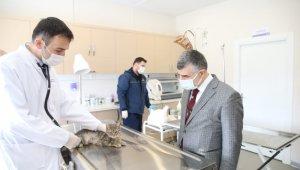 Sokak hayvanlarına özel klinik açıldı