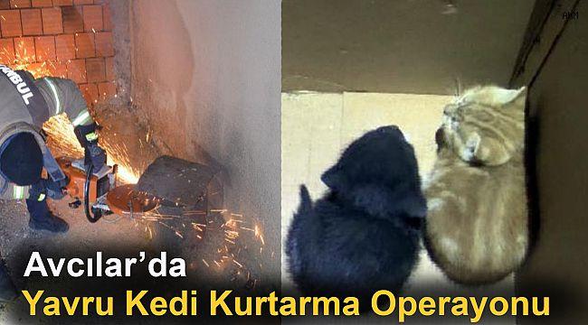 Avcılar'da Yavru Kedi Kurtarma Operasyonu