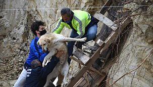 Avcılar'da İnşaat Temeline Düşen İki Köpek Kurtarıldı