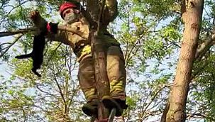 Avcılar'da Ağaçta Mahsur Kalan Kediyi İtfaiye Kurtardı