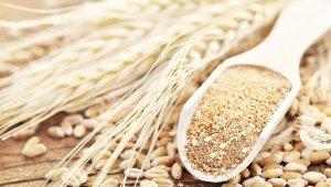 HEKTAŞ, tescilli siyez buğdayı üretecek