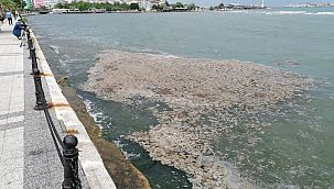 Marmara Denizi'nde ölü yengeç tedirginliği!