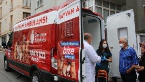 Ümraniye'de hayvan ambulansı hayat kurtarıyor