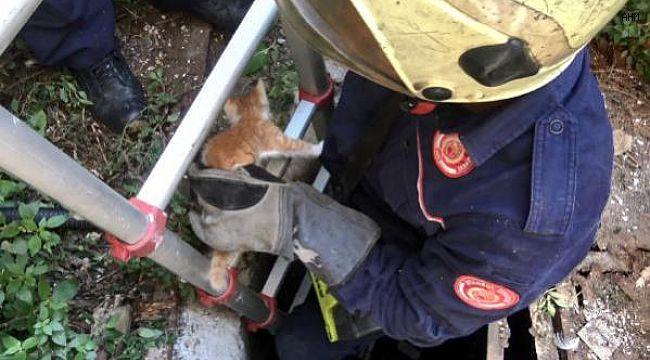 Avcılar'da Su Kuyusuna Düşen Yavru Kedi Kurtarıldı