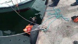 Avcılar'da denize düşen kedi için itfaiye seferber oldu