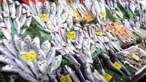 Balık tezgahlarında lüfer bolluğu yaşanıyor