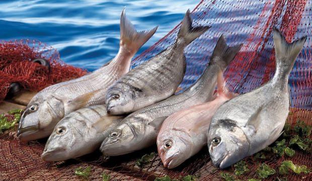Balık Üreticilerine İki Önemli Destek