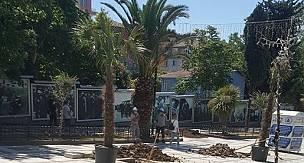 Sökülen  Palmiyelerin Yerine Yenileri Dikildi